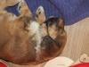 Greta beim Schlafen