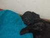 Sally beim Schlafen